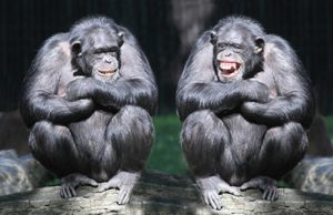chimp_duo_500