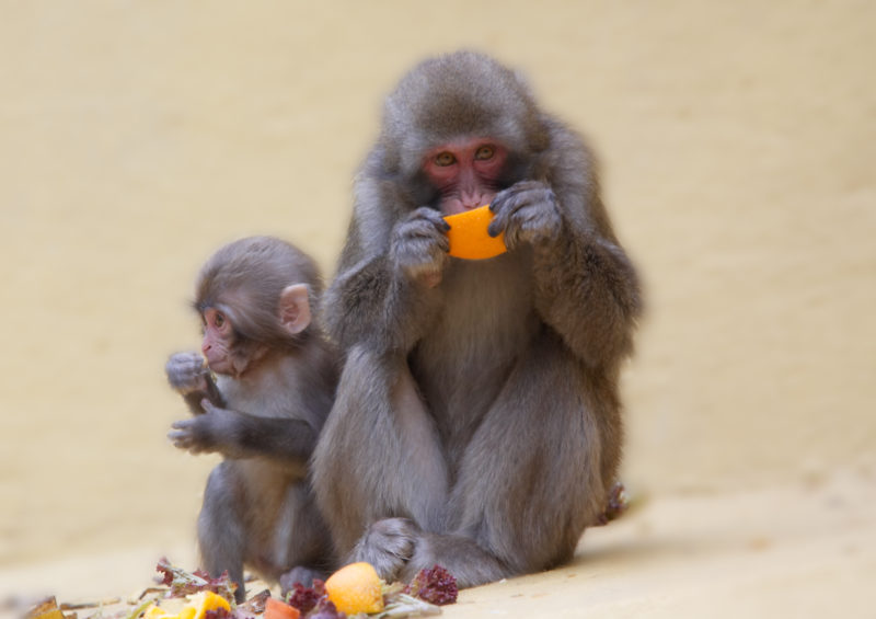 mom_and_baby_monkey