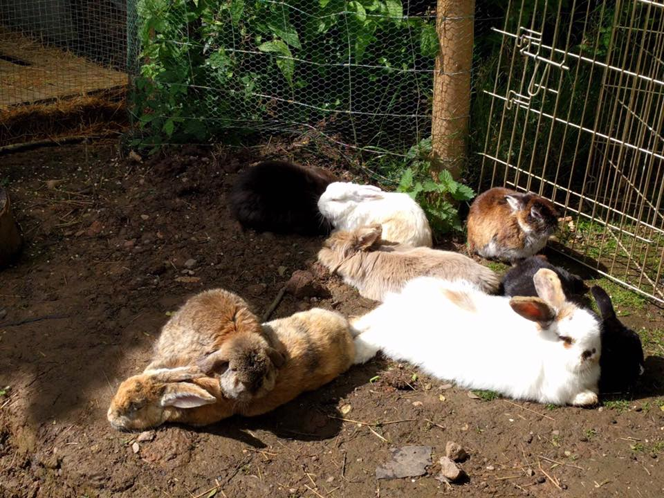 Bunnies in the sun at Fat Fluffs Rescue Center