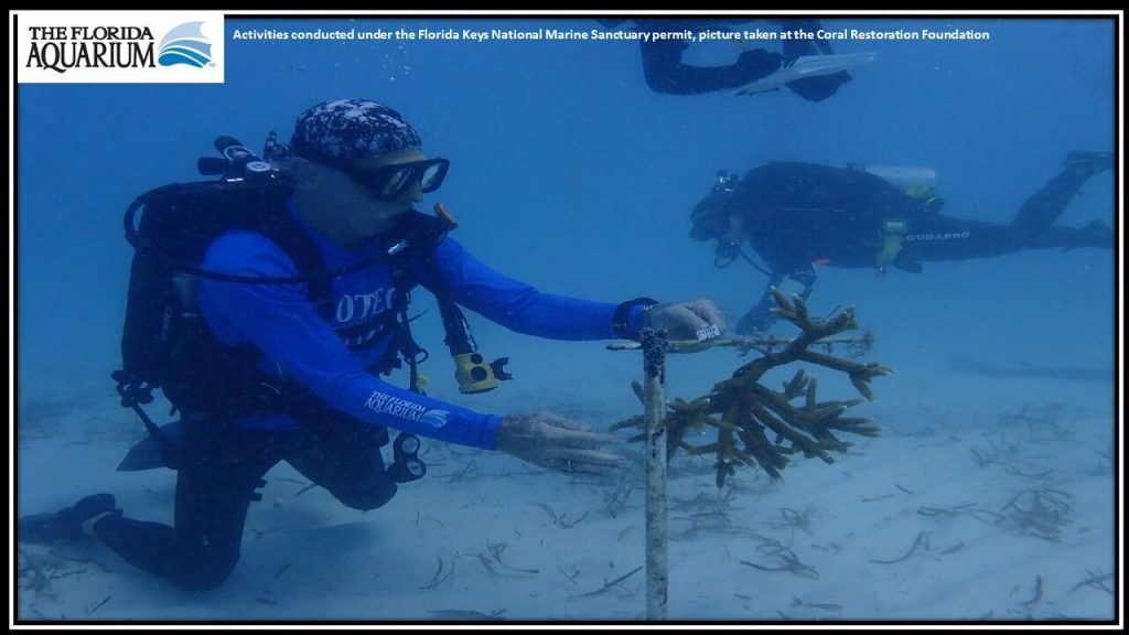 Coral conservation at the Florida Aquarium (Photo via Katie Kisner)