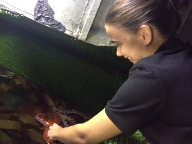 Confessions Of An Aquarium Registrar – Octopus Personalities And Coral Conservation