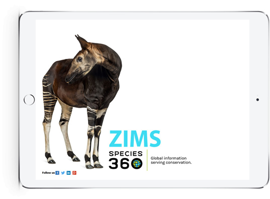 Raving About Responsive Design On ZIMS