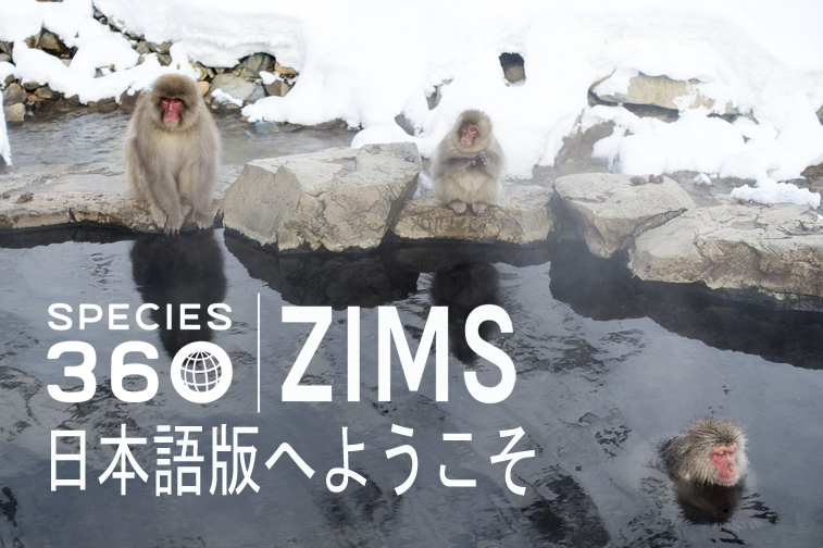 ZIMS japanese announcement