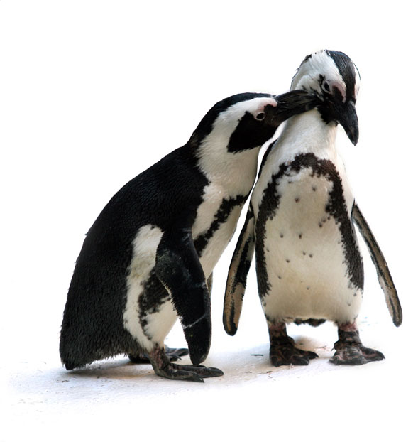 corporate sponsors - penguin couple