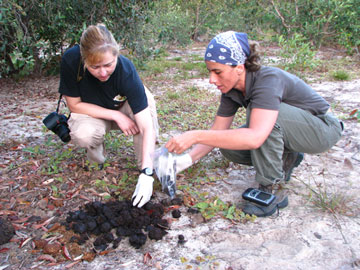 Patricia collecting tapir fecal samples (Photo by Danilo Klubyer)