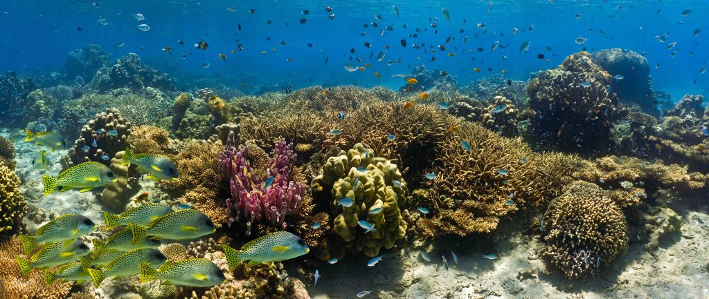 Shoal of fish on the coral reef – panorama