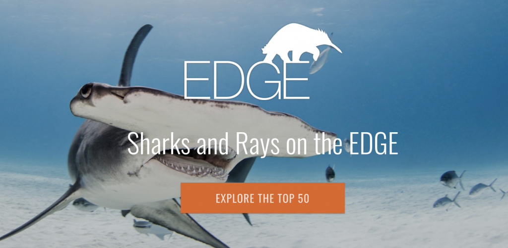 EDGE of Existence program highlights and seeks to protect our most unique species.