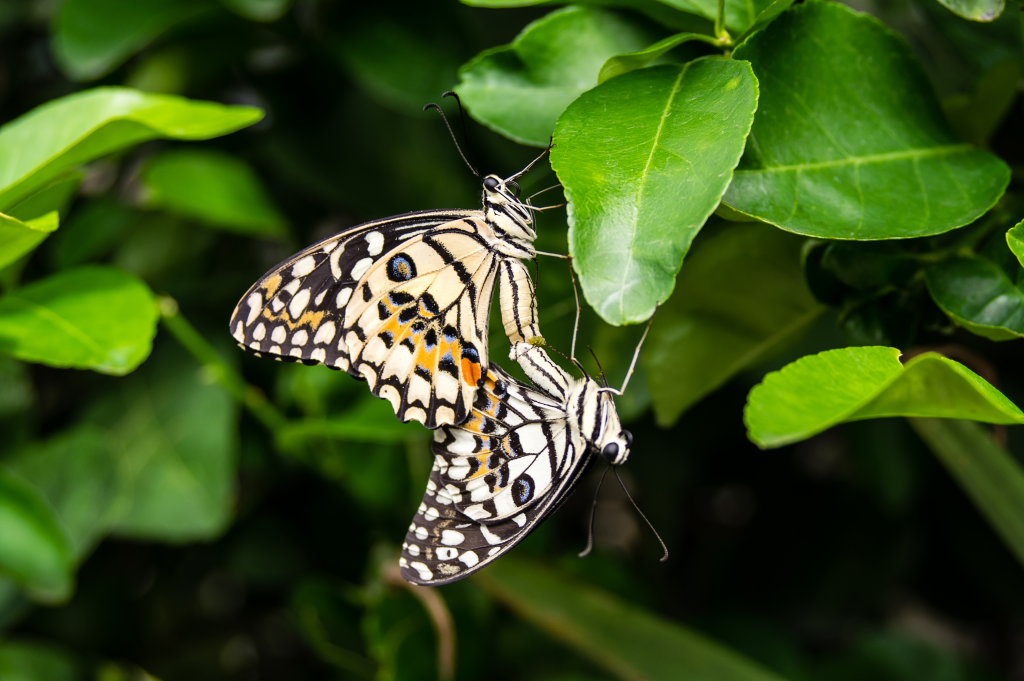 Butterflies-AdobeStock_113693557