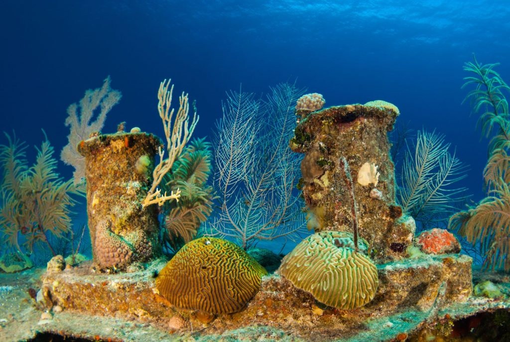 The wreck of the Doc poulson in Grand Cayman is an artificial reef and is now home to much coral and fish life. The little sunken vessel is a popular attraction for adventurous scuba divers