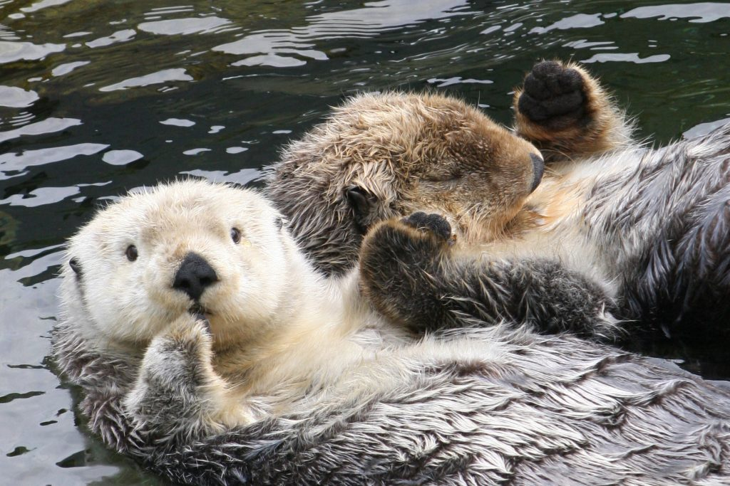 vancouver otters