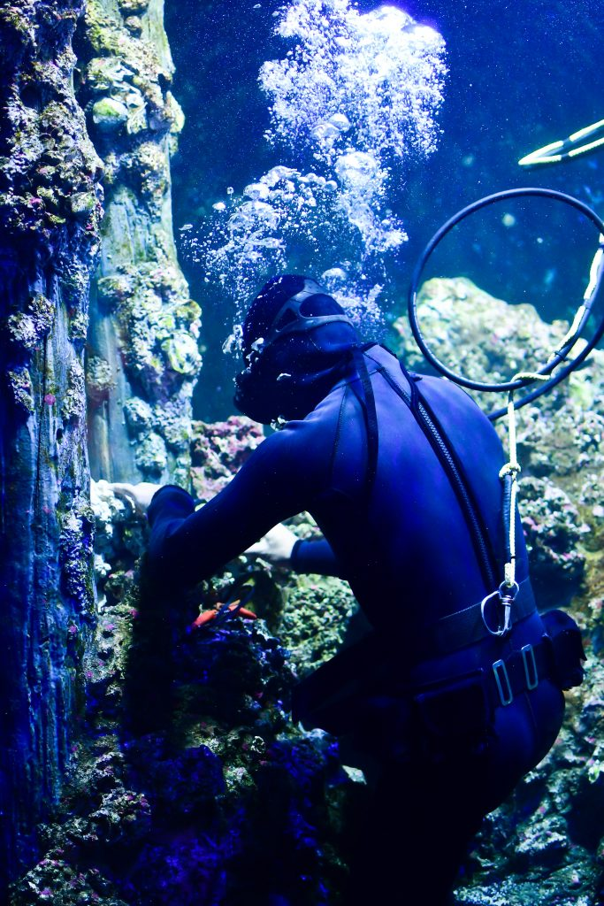 More than 350 aquariums worldwide use ZIMS to help manage everything from water quality to medical records.