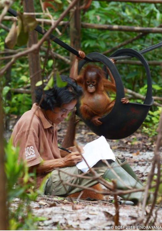 Borneo Orangutan Survival Foundation Hosts Species360 Training