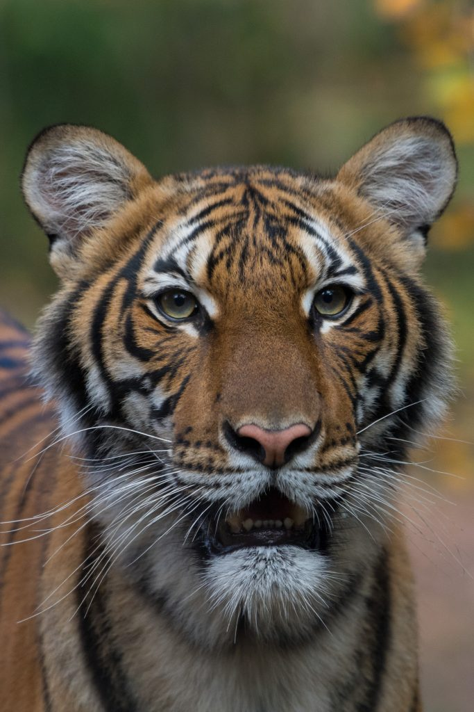 Species360 Members Bronx Zoo Reports First Case Of Covid 19 In An Animal In U S Species360