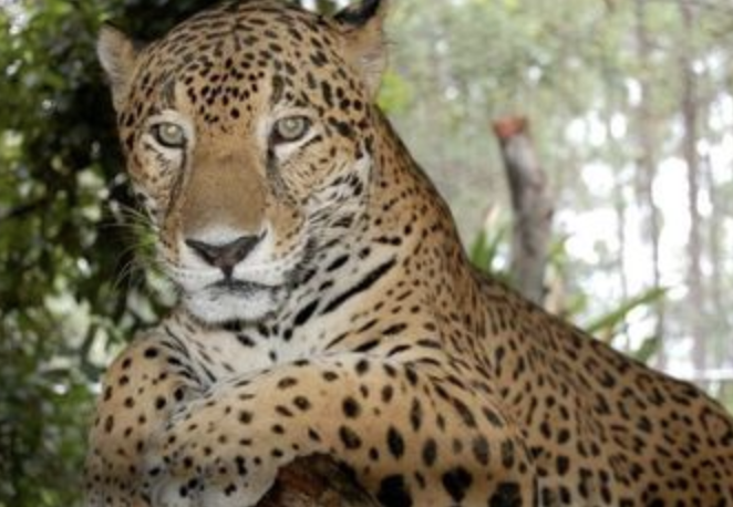Pat Gives Back: Belize Zoo Adopts A New Records Keeping System With Help From Linda Rohr Bachers