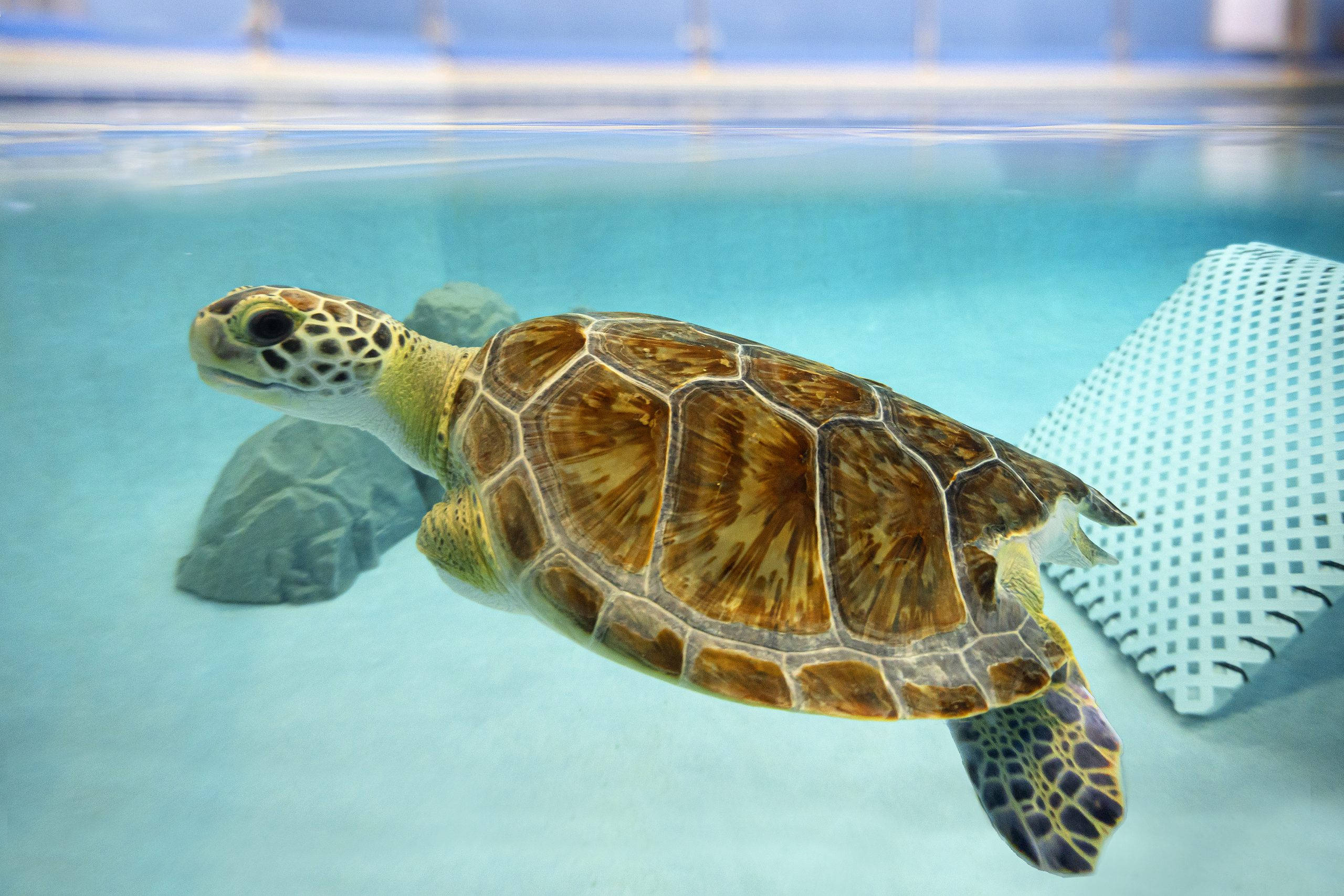 Navarre Beach Sea Turtle Conservation Center Contributes Vital Data As Part Of Species360