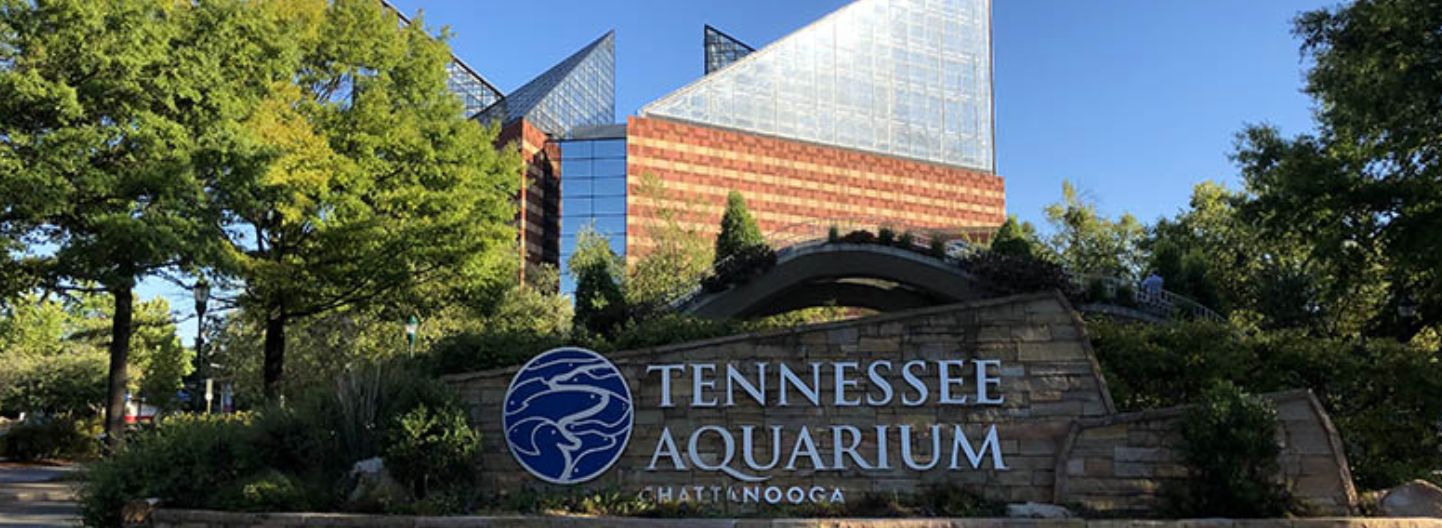 FEATURE: With A Deep Sense Of Place, Tennessee Aquarium Advocates For Turtles And Their Habitats