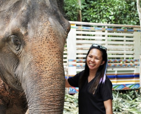 Hospital And Mobile Veterinary Care: Southern Thailand Elephant Foundation Joins Species360