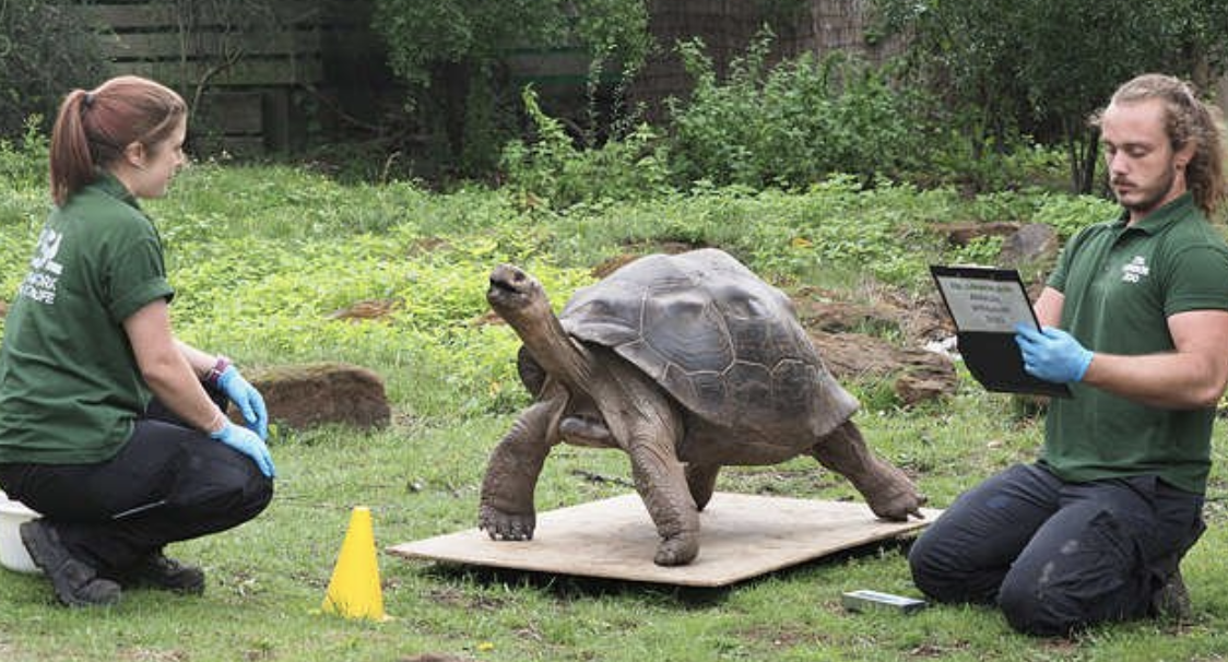 ZSL London Zoo Shares Annual Weigh-in Via ZIMS