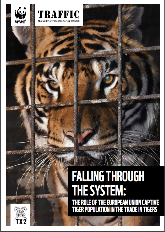 WWF / Tiger Trade: Central EU Registry, Much Like The One EAZA Requires Of Its Members, Among Steps Needed To Protect Animals