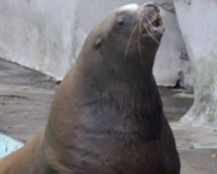 "The Kaliningrad Zoo Creates ""hospice"" For The World's Oldest Sea Lion"