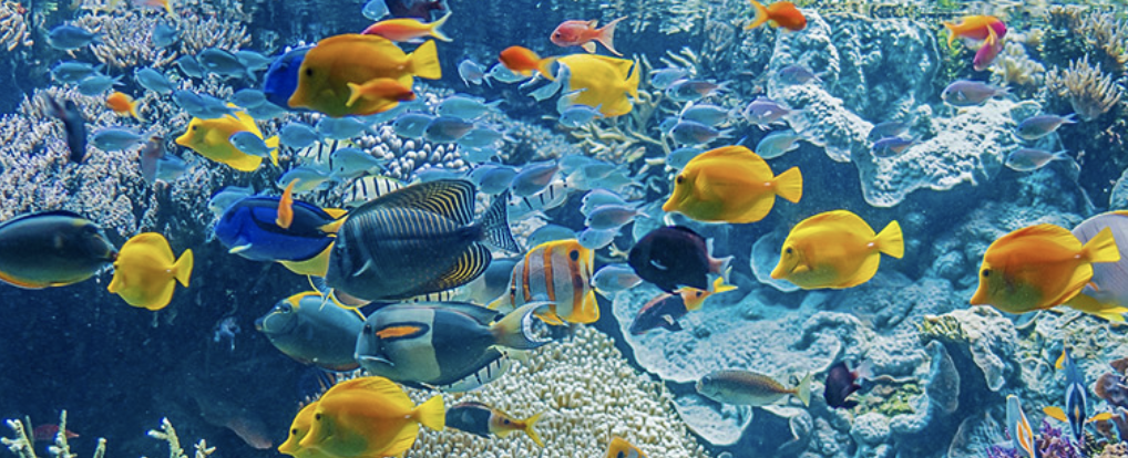 Aquariums Of Brazil, France, United Arab Emirates, And United States Join Species360